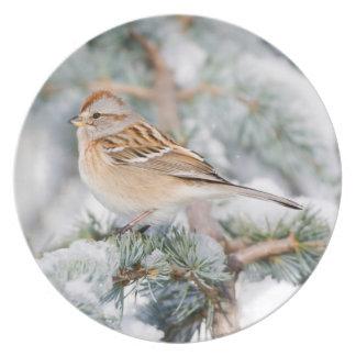 American Tree Sparrow in winter Dinner Plates