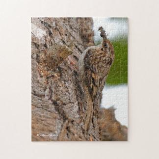 American Treecreeper with Bug Jigsaw Puzzle