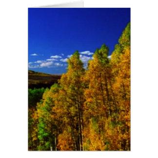 American Trees Fall Season Nature Photography Card