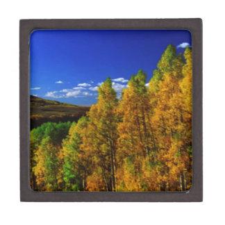 American Trees Fall Season Nature Photography Keepsake Box