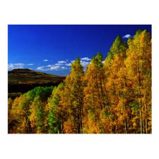 American Trees Fall Season Nature Photography Postcard