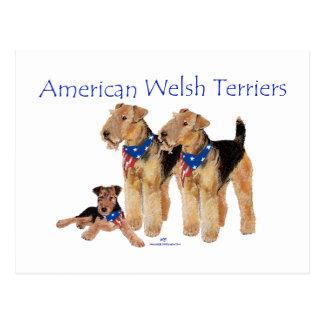 American Welsh Terriers Postcard
