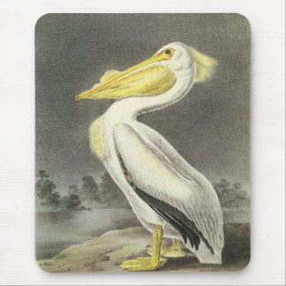 American White Pelican by Audubon Mouse Pad