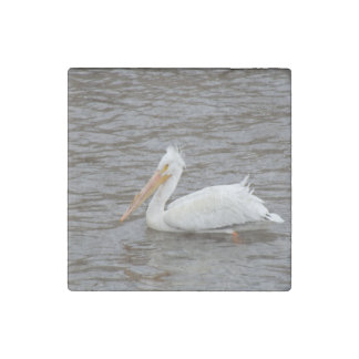 American White Pelican In Breeding Condition Stone Magnet