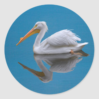 American White Pelican on Water  Sticker