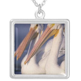 American White Pelican, Pelecanus Silver Plated Necklace