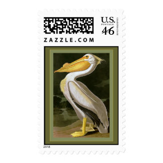 American White Pelican Stamp