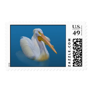 American White Pelican Postage Stamp