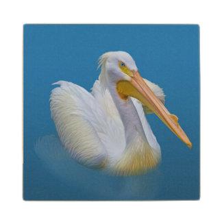 American White Pelican Wood Coaster