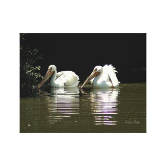 American White Pelicans Gallery Wrap Canvas