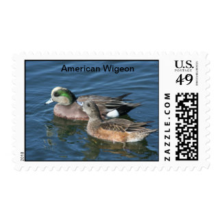 American Wigeon Duck Pair Stamp