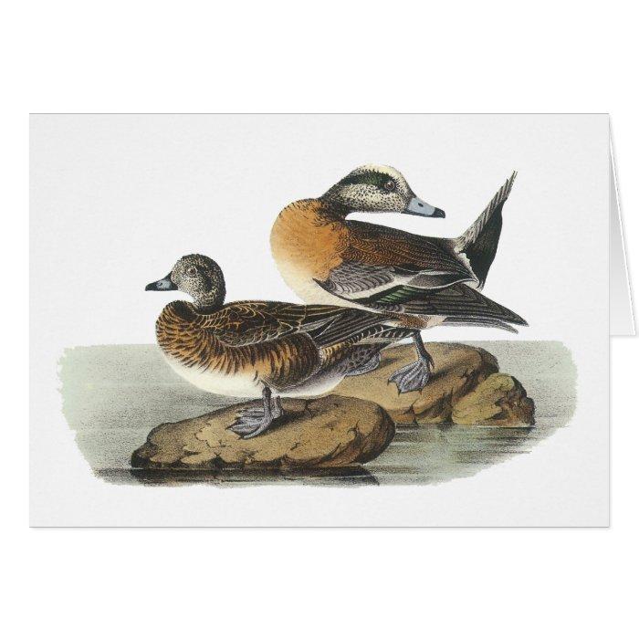 American Wigeon, John Audubon Card
