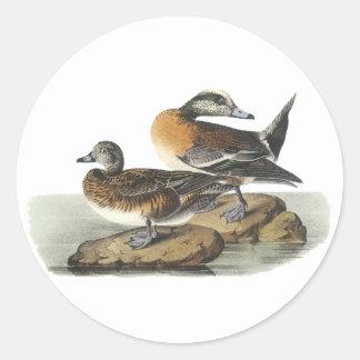 American Wigeon, John Audubon Classic Round Sticker