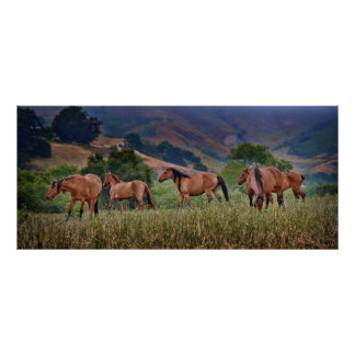 American Wild Mustang Horses Poster
