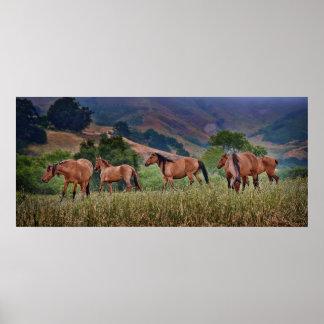 American Wild Mustang Horses Print