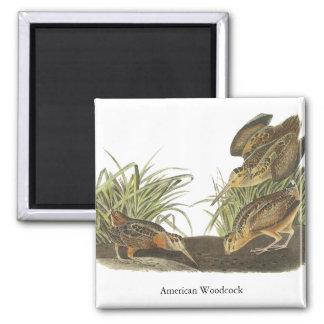 American Woodcock, John Audubon Print 2 Inch Square Magnet