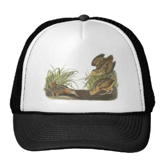 American Woodcock John Audubon Print Hats