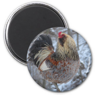 AMERICANA ROOSTER IN WINTER GIFTS MAGNET