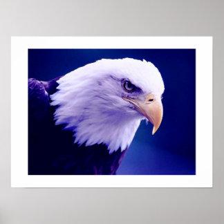 Americano Eagles - impresiones de los posters de E