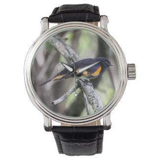 Americano Redstart Reloj