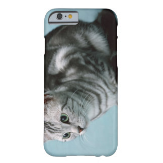 Americano Shorthair Funda Para iPhone 6 Barely There