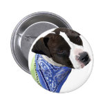 Americano Staffordshire Terrier-Aggie Pins