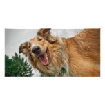 Amiga the Smiling Collie Personalized Photo Card