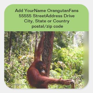 Amigo del animal de la selva tropical pegatina cuadrada
