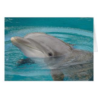 Amigo del delfín hola tarjeta de felicitación