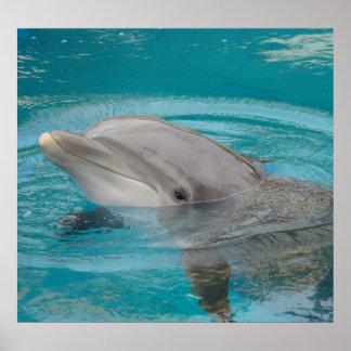 Amigo del delfín póster