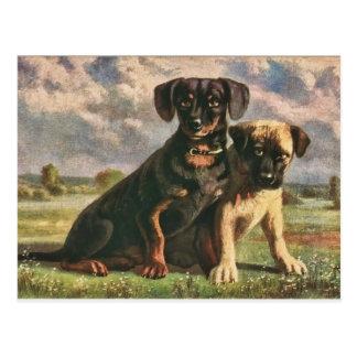 Amigos caninos tarjeta postal