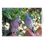 Amigos de la paloma - tarjeta