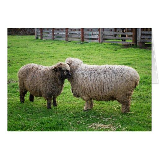 Amigos de las ovejas felicitación