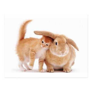 amigos del conejo de conejito del gatito cute_funn tarjetas postales