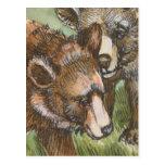 Amigos del oso grizzly postal