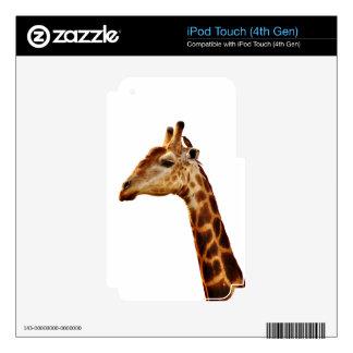 Amigos manchados de la jirafa iPod touch 4G calcomanía