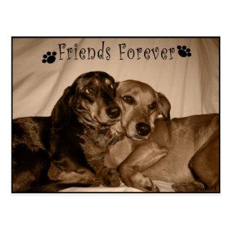 Amigos para siempre tarjetas postales