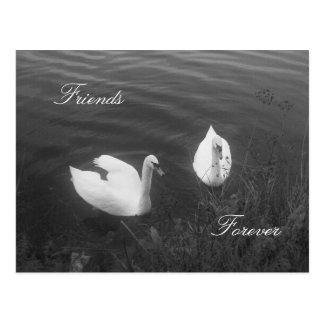 Amigos, para siempre postal