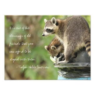 Amigos y mapaches de la cita de la amistad de las cojinete
