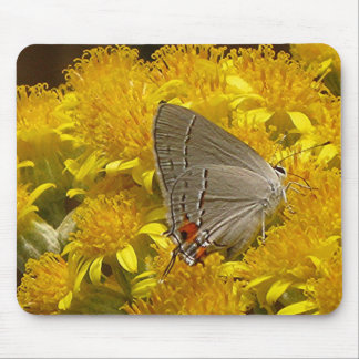 AMILDA'S GRAY HAIRSTREAK mousepad