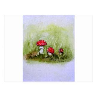 Aminita Muscaria mushroom Postcard