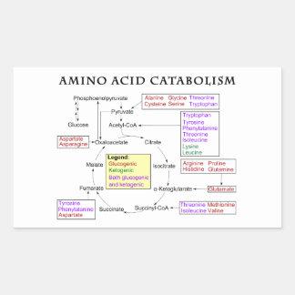 Amino Acid Catabolism Diagram Rectangular Sticker