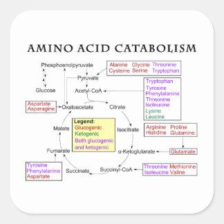 Amino Acid Catabolism Diagram Square Sticker