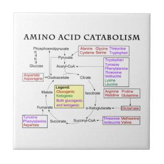 Amino Acid Catabolism Diagram Tile