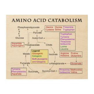 Amino Acid Catabolism Diagram Wood Wall Art