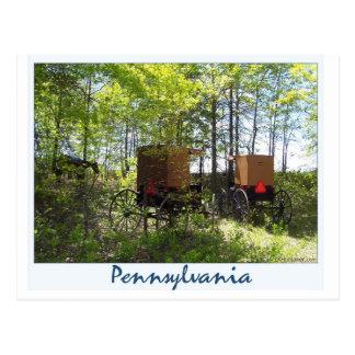 Amish Buggies Postcard
