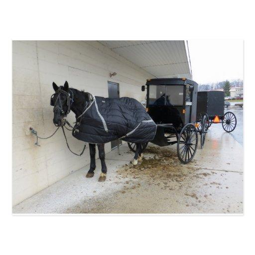 Amish Buggy At Pennsylvania Market Post Cards