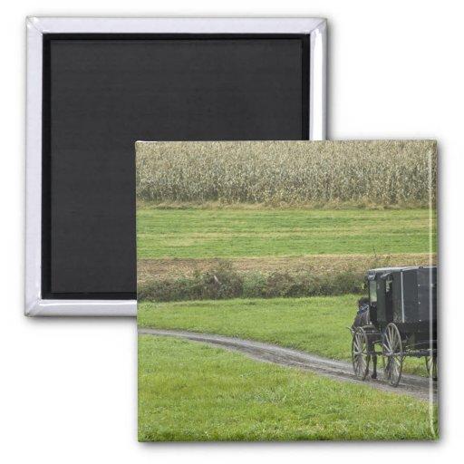 Amish buggy on farm lane, Northeastern Ohio, 2 Inch Square Magnet