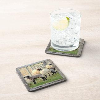 Amish Coasters! Lambs and Sheep! 6 Beverage Coaster