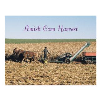 Amish Corn Harvest Postcard